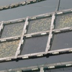 fishfarm.jpg.662x0_q100_crop-scale